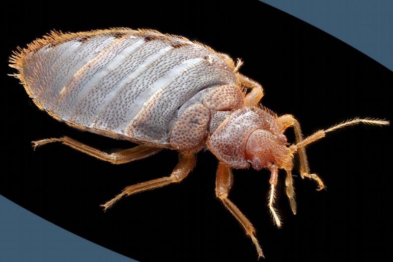 Bed Bug Landlord Responsibility Michigan
