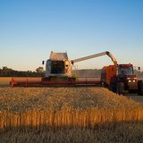 Wheat harvest with a Claas Lexion before sunset near Branderslev, Lolland, Denmark By Larsz/Lars Plougmann [CC-BY-SA-2.0 (http://creativecommons.org/licenses/by-sa/2.0)], via Wikimedia Commons