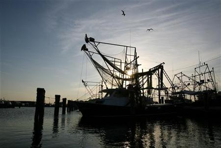 Shrimp boats sit in the Venice Marina after the Louisiana Department of Wildlife and Fisheries (LDWF) Secretary Robert Barham announced that the shrimp season in the territorial seas of the central coast of Louisiana from Four Bayou Pass to Freshwater Bayou were closed effective sunset Saturday due to the Deepwater Horizon oil spill in Venice, Louisiana May 9, 2010. REUTERS/Sean Gardner