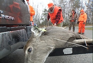 A hunter ties up a doe shot at Potawatomi State Park on Sunday November 21, 2010. (courtesy of FOX 11)