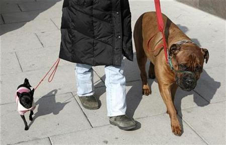 A woman walking her vastly different sized dogs provides a study in contrast in downtown Washington February 25, 2008. REUTERS/Kevin Lamarque