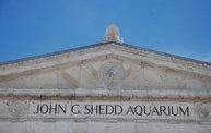 Shedd Aquarium - 02/13/11 7