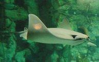 Shedd Aquarium - 02/13/11 5