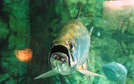 Shedd Aquarium - 02/13/11 4