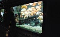 Shedd Aquarium - 02/13/11 3