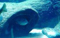 Shedd Aquarium - 02/13/11 1