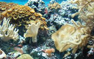 Shedd Aquarium - 02/13/11 28