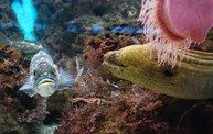 Shedd Aquarium - 02/13/11 26