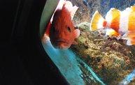 Shedd Aquarium - 02/13/11 25