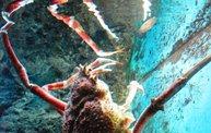 Shedd Aquarium - 02/13/11 23