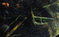 Shedd Aquarium - 02/13/11 22