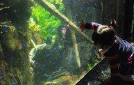 Shedd Aquarium - 02/13/11 21