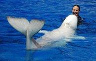 Shedd Aquarium - 02/13/11 16