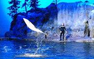 Shedd Aquarium - 02/13/11 15