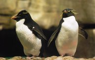 Shedd Aquarium - 02/13/11 13