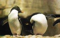 Shedd Aquarium - 02/13/11 12