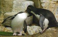 Shedd Aquarium - 02/13/11 11