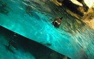 Shedd Aquarium - 02/13/11 10