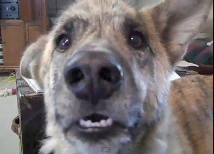 скачать бесплатно talking dog - фото 2
