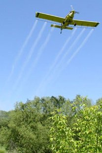 DNR gypsy moth spray plane