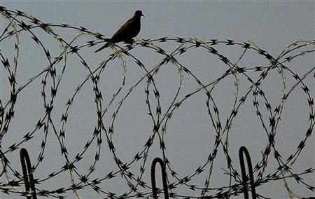 A bird sits on a barbered wire fence at Abu Ghraib prison