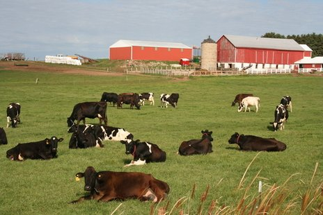 A dairy farm in Wisconsin
