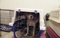 Missouri Dogs Arrive at Headin' Home Pet Rescue 26