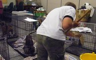 Missouri Dogs Arrive at Headin' Home Pet Rescue 5