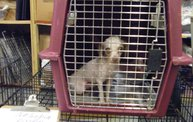 Missouri Dogs Arrive at Headin' Home Pet Rescue 18