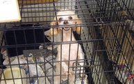 Missouri Dogs Arrive at Headin' Home Pet Rescue 23