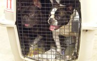 Missouri Dogs Arrive at Headin' Home Pet Rescue 10