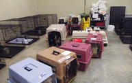 Missouri Dogs Arrive at Headin' Home Pet Rescue 24