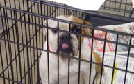Missouri Dogs Arrive at Headin' Home Pet Rescue 9