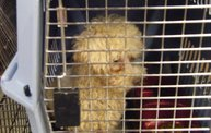 Missouri Dogs Arrive at Headin' Home Pet Rescue 16