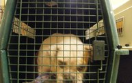 Missouri Dogs Arrive at Headin' Home Pet Rescue 11