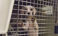 Missouri Dogs Arrive at Headin' Home Pet Rescue 29