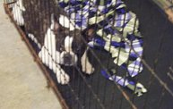 Missouri Dogs Arrive at Headin' Home Pet Rescue 21