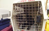 Missouri Dogs Arrive at Headin' Home Pet Rescue 4