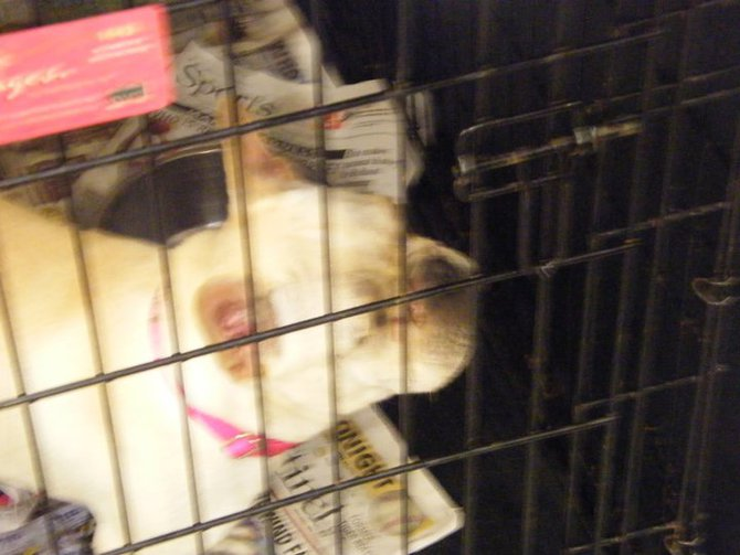 Missouri Dogs Arrive at Headin' Home Pet Rescue