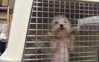 Missouri Dogs Arrive at Headin' Home Pet Rescue 14