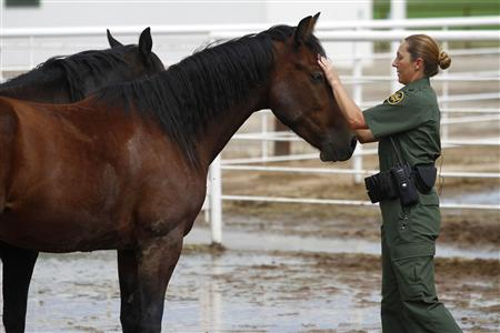 Supervisory U.S. Border Patrol Agent Bobbi Schad pets one of the six new mustang horses at the horse patrol training facility in Willcox