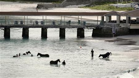 Horses from a local race course are given a morning bath along a public beach just outside Bridgetown, Barbados, in this June 15, 2008 file