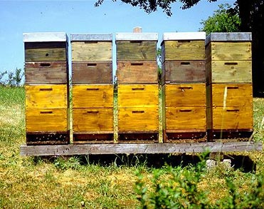 A set of beehives sit in an open field