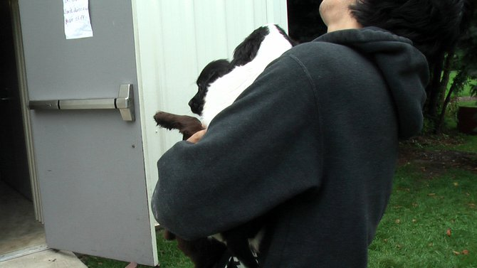 Puppies Arrive at Headin' Home Pet Rescue