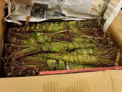Khat seizure in Green Bay
