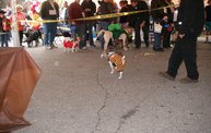 23rd Annual Costume Contest for Dogs 2