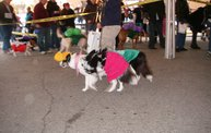 23rd Annual Costume Contest for Dogs 1