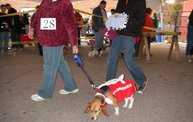 23rd Annual Costume Contest for Dogs: Cover Image