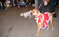 23rd Annual Costume Contest for Dogs 13