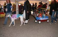 23rd Annual Costume Contest for Dogs 10